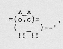 typewriter cat_2015.jpg
