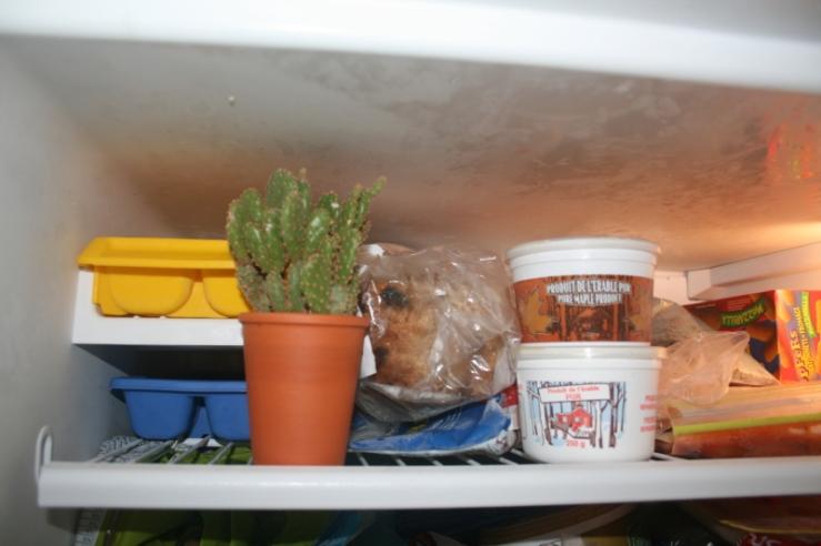 peg cactus